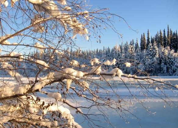 Sun shines on the Chena River near Moose Creek. Photo by Bonnie Speck