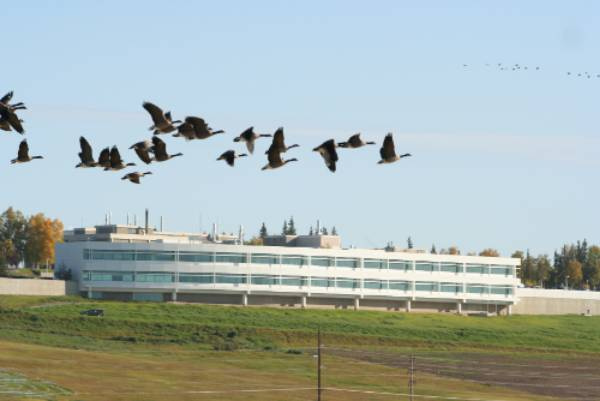 Geese flying over Butrovich