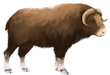 muskox-bootherium